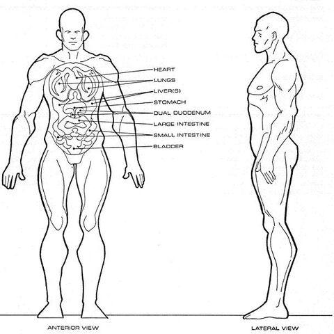 File:Homo sagittarii physiology.jpg
