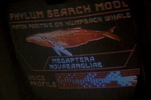File:Humpback whale display.jpg