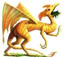 Draco Berengarius