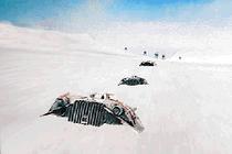 SnowspeederCCG