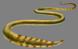 Brain worm.jpg