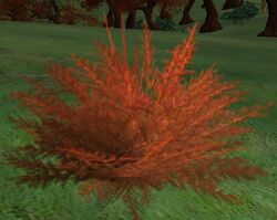 Redweed