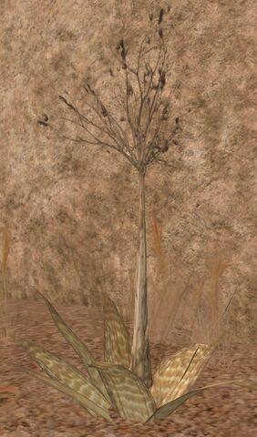 File:Tall weed-SWG.jpg