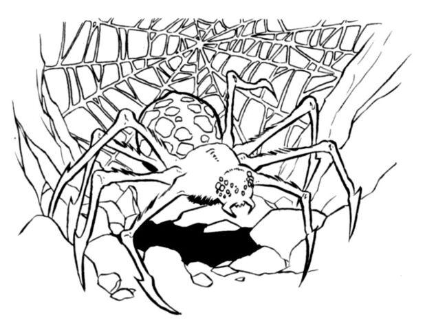 File:Purella Spider.jpg