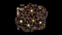 Starfish Fauna