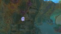 BladderfishGallery