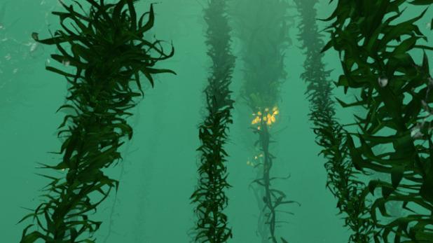 File:Kelp-618x347.jpg