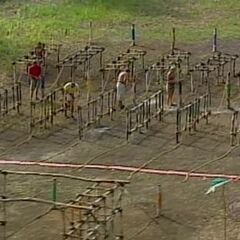 The tribe competes in the final 8 Immunity Challenge.