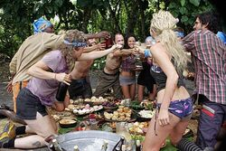 Aiga-tribe