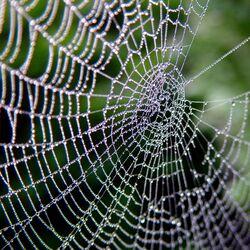 Spiderweb-8232