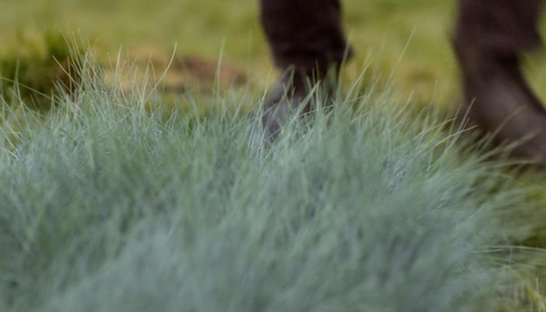 Blue-grass