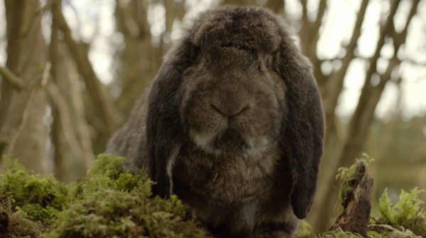 File:Rabbit The Day of the Doctor.jpg
