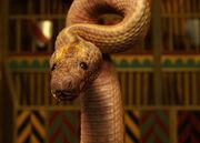 Colony Sarff Snake