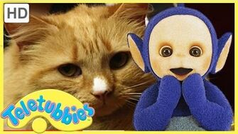 Teletubbies Full Episode - Cat's Night Out