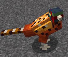 PheasantMale1