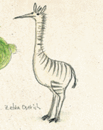 ZebraOstritch