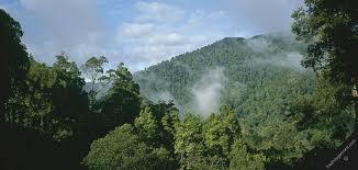 File:TropicalArena.jpg