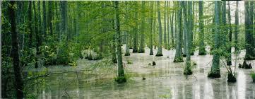 File:Swamp
