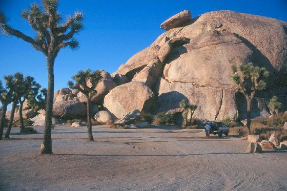 File:968183-Joshua Tree National Park-Joshua Tree National Park.jpg