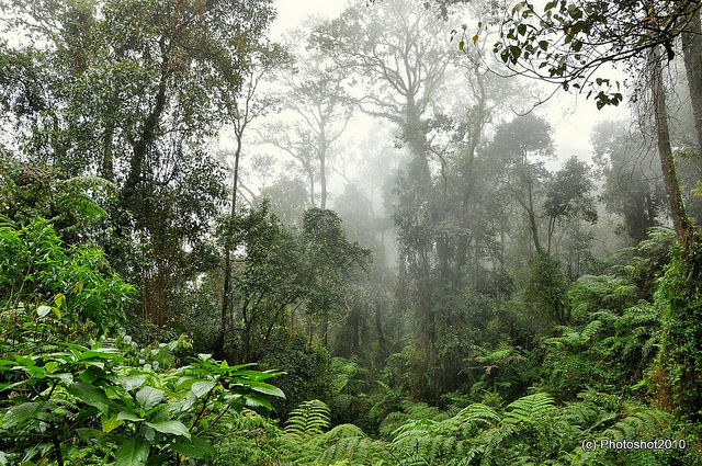 File:Indonesian forest.jpg