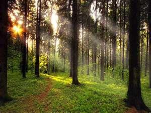 File:Forest12.jpg