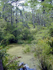 Florida freshwater swamp usgov image