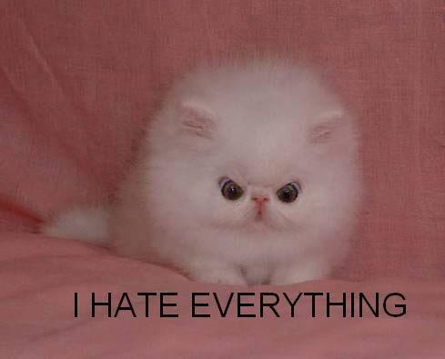 File:I-Hate-Everything.jpg