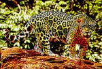 Jaguar Mutt