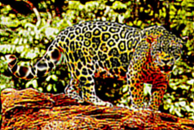 File:Jaguar Mutt.jpg