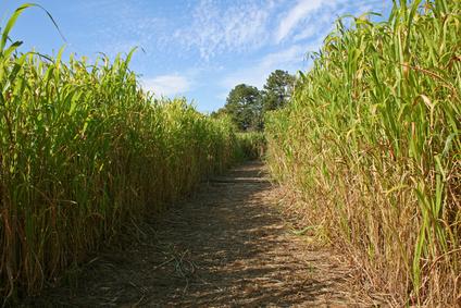 File:Corn Maze Silver 9.jpg
