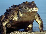 Crocodile mutt