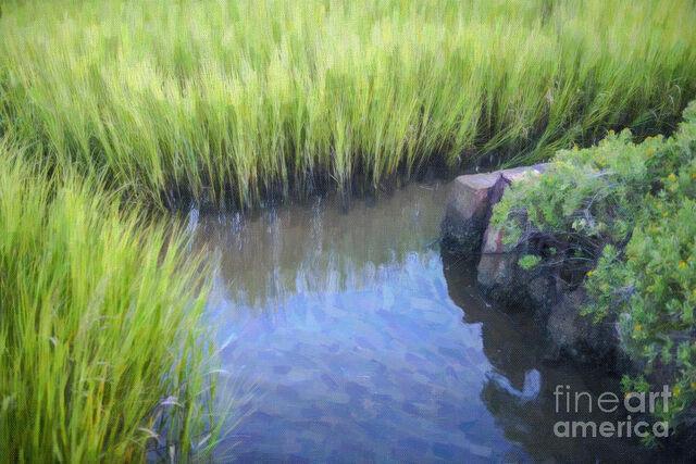 File:Tall-marsh-grass-dale-powell.jpg