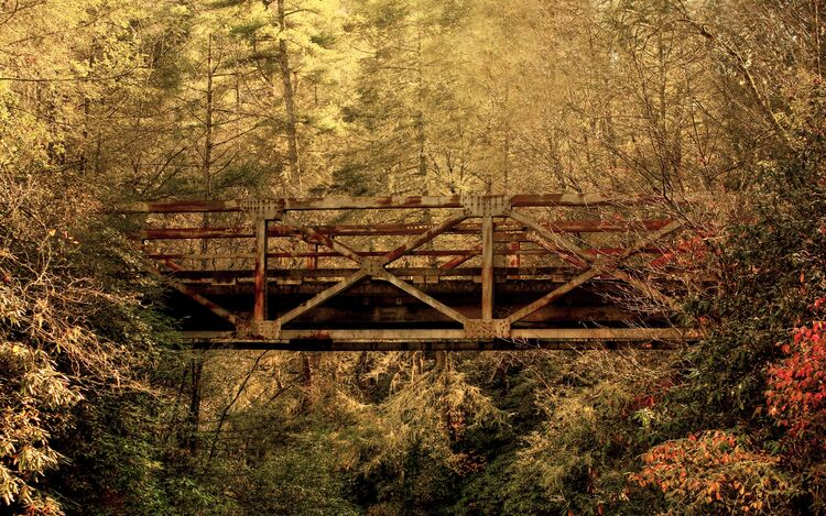 Abandoned Forest Bridge