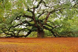 File:Tree climbing.jpg