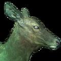 Rocky mountain elk female ghost