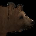 Black bear male blonde