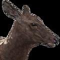 Rocky mountain elk female piebald