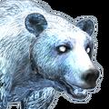 Brown bear female ghost