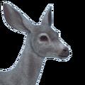 Sitka deer female albino