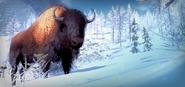 2016 04 bison