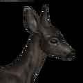 Blacktail deer female melanistic