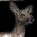 Roe deer female piebald