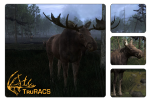 Species moose 700