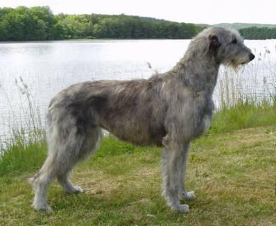 Granuaile S Dog