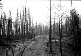 File:Black Leaves 2.jpg