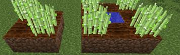 Crops Raised