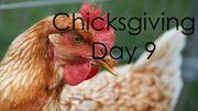 ChicksgivingDay9