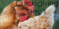 Chicksgiving