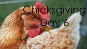 ChicksgivingDay6