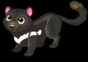 Tasmanian devil cat static
